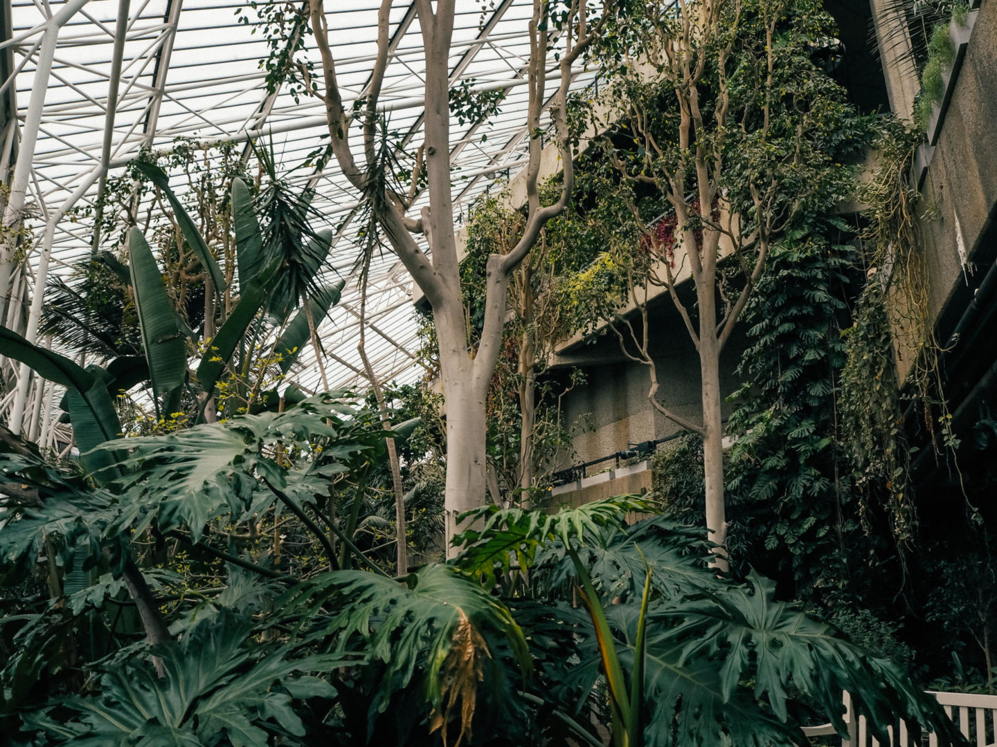 Barbican Conservatory
